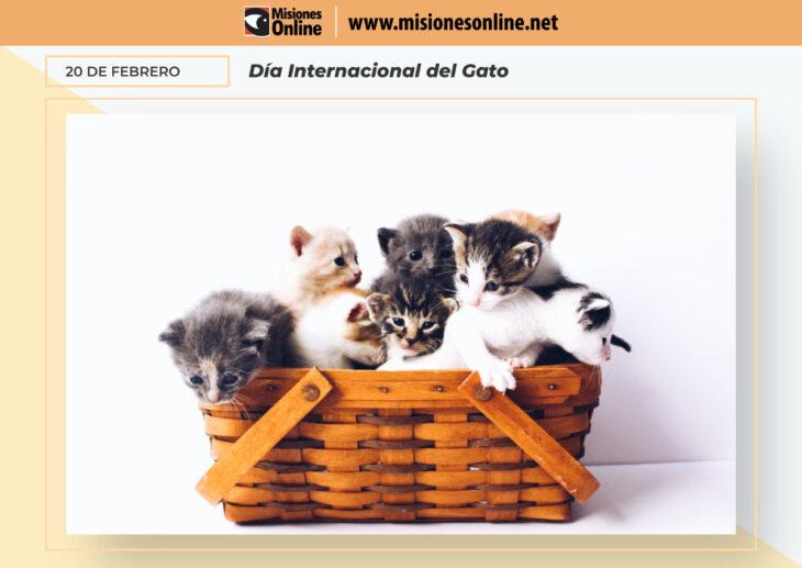 En honor a nuestros amigos felinos hoy se celebra el Día Internacional del Gato