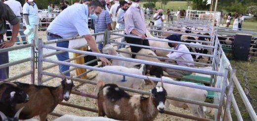 Se realizó exitosamente el primer remate de ganado menor exclusivamente misionero