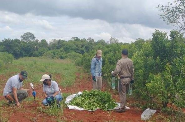 Yerbateros de Comandante Andresito recibieron capacitación por parte del INYM para mejorar las futuras cosechas