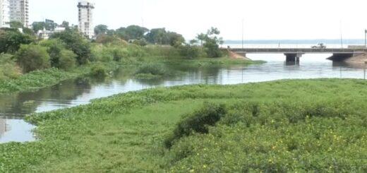 Avistaje de aves: mirá el espectáculo natural que dejó el paseo realizado en la Reserva Arroyo Itá de Posadas