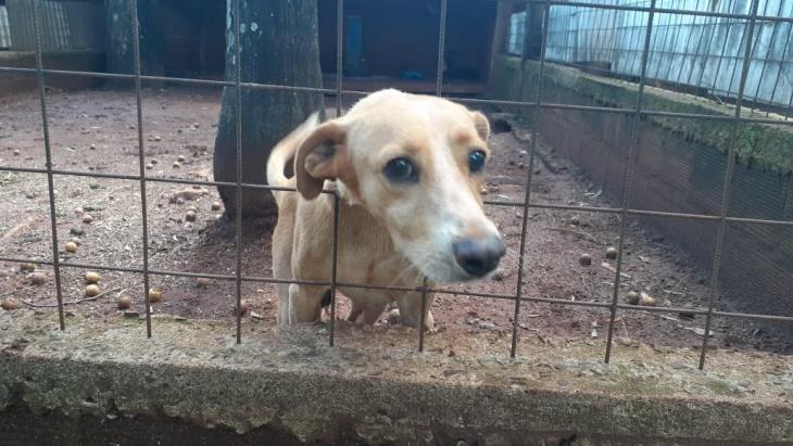 El maltrato y abandono de animales sigue siendo una problemática alarmante en Posadas