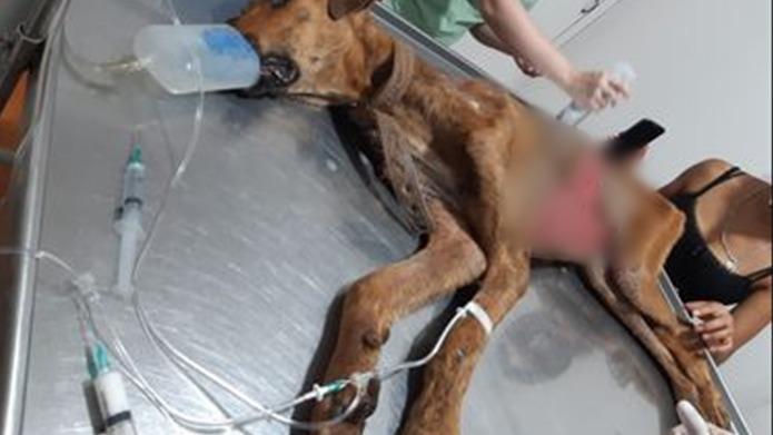 Solicitan colaboración para el tratamiento veterinario de Gago