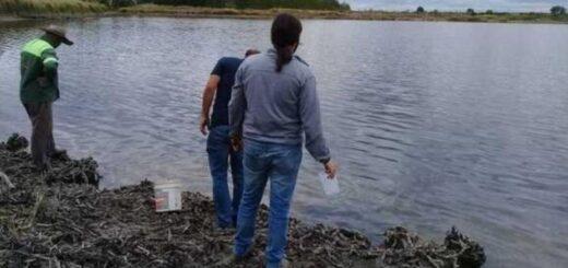 Mendoza: investigan la muerte de peces en una laguna