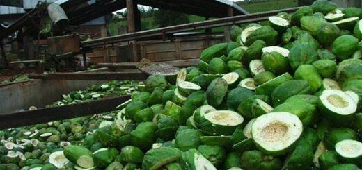 La CAUL realiza relevamientos para determinar los efectos de la sequía en la producción de ananá y mamón en la provincia