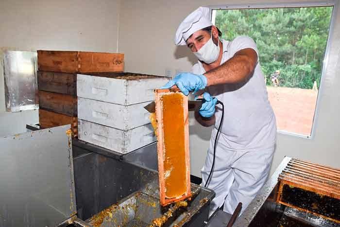 La Cooperativa Apícola de 25 de Mayo finalizó una gran temporada de zafra mielera