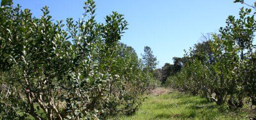 El INYM habilitó turnos para registro de productores y yerbales que realizará en San Pedro
