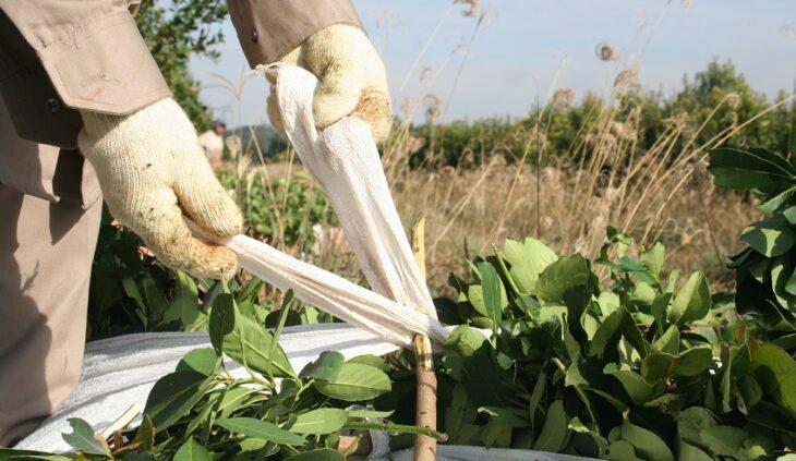El INYM creó el Programa Balanza pilón y trípode para pesar raídos de yerba mate