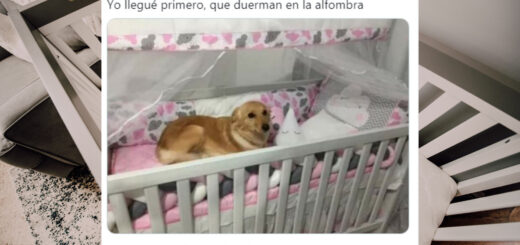 Viral: una perrita se niega a cederle la cuna al bebé