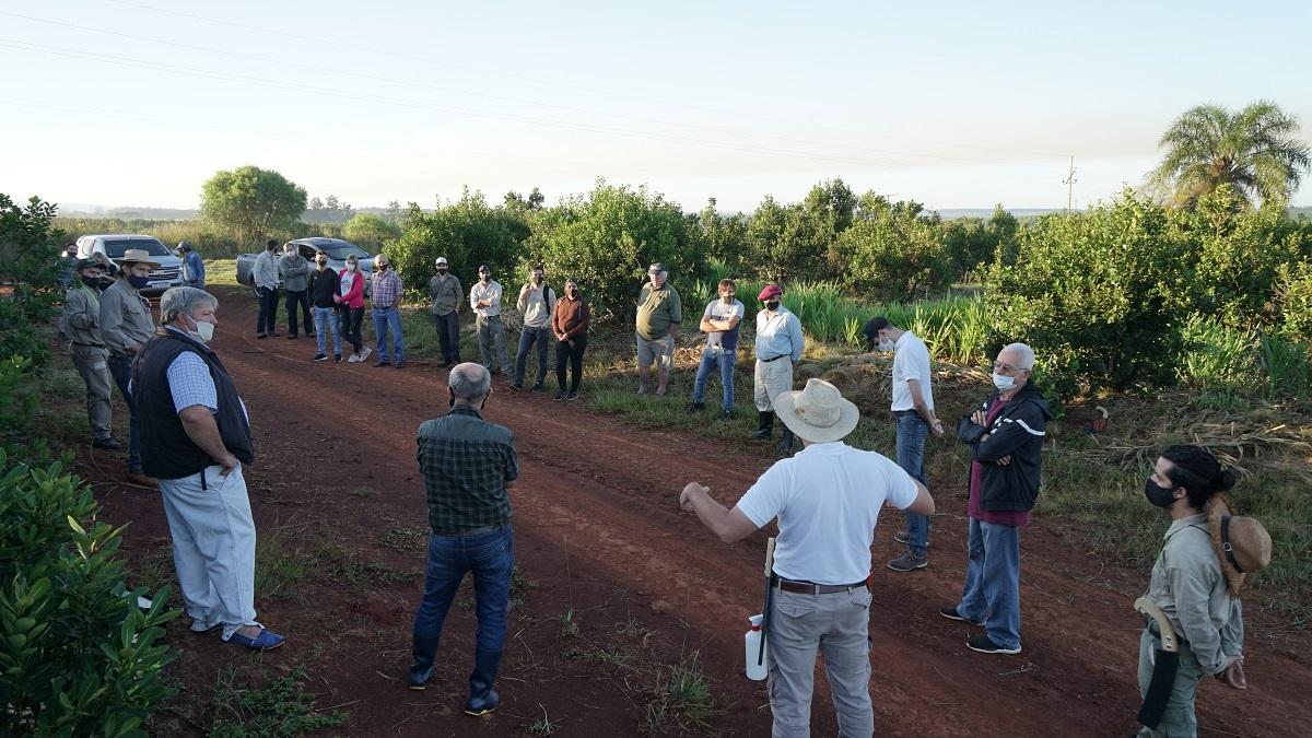 Cosecha de rama madura, una alternativa interesante en la producción de yerba mate