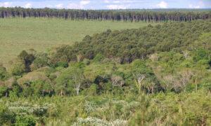 productores forestales dejaron de plantar