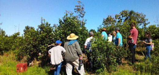 San Pedro: cómo lograr una buena cosecha fue tema entre productores y yerbateros