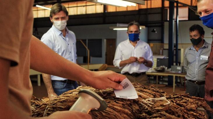 Está vigente el acopio de tabaco en la provincia de Misiones