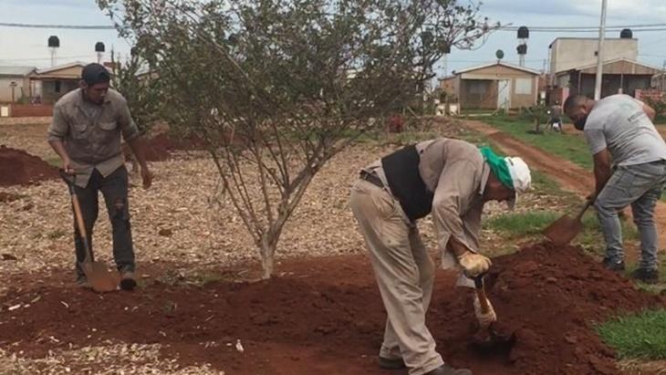 Trasplantarán cien árboles de la avenida Quaranta a Itaembé Guazú