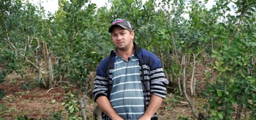 Con buen manejo y asistencia técnica, un pequeño productor alcanzó los 20 mil kilos de hoja verde por hectárea