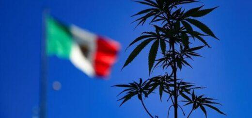 México aprobó el consumo lúdico de la marihuana