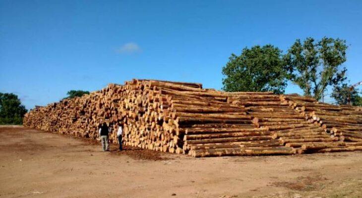 «No hay problemas de desabastecimiento de rollos de madera en Misiones, lo que ocurre es que se paga al productor precios ridículos por la materia prima», aseguró el presidente del Instituto Forestal