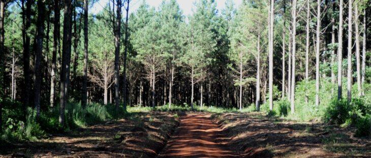 Pequeños productores forestales dejaron de plantar: desde APICOFOM buscan revertir la situación