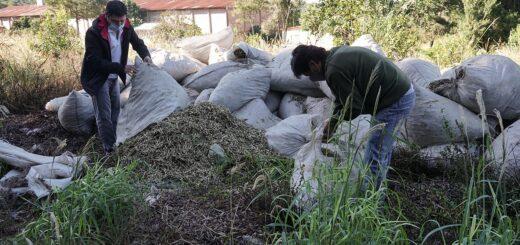 El INYM clausuró un molino clandestino e inutilizó 41 mil kilos de palitos de yerba