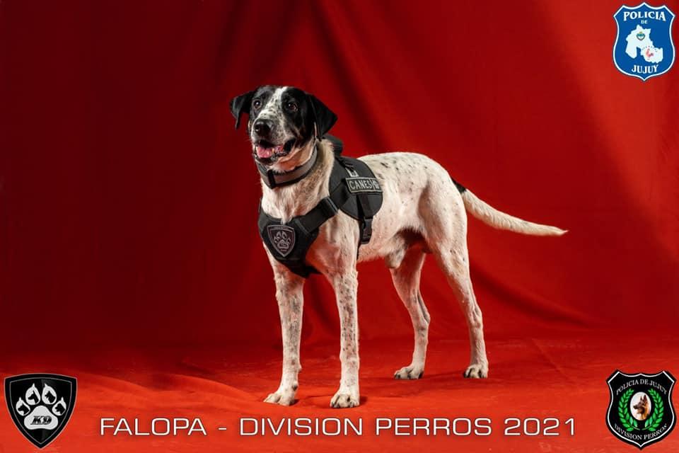 El curioso nombre de un perro policía de Jujuy se volvió viral en las redes