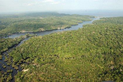 Brasil recorta su presupuesto ambiental a pesar de las promesas hechas en la cumbre sobre el clima