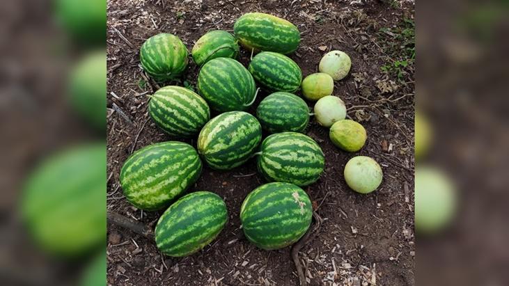 Posadas sustentable: cosecharon casi 59 kilos de frutas del Centro Verde