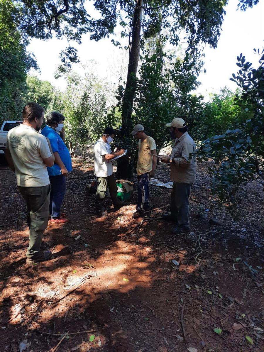 Detectaron tareferos y trabajadores forestales bajo explotación laboral en Misiones