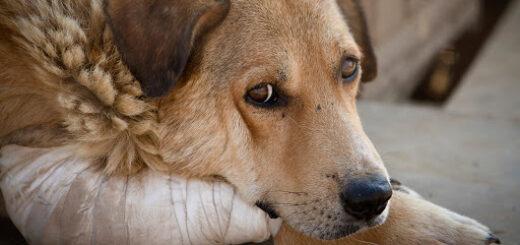 Diputado provincial propone la creación de una división anti maltrato animal en la Policía de Misiones
