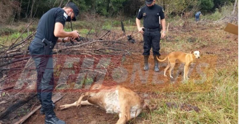 cerdos y perros mutilados en Alem