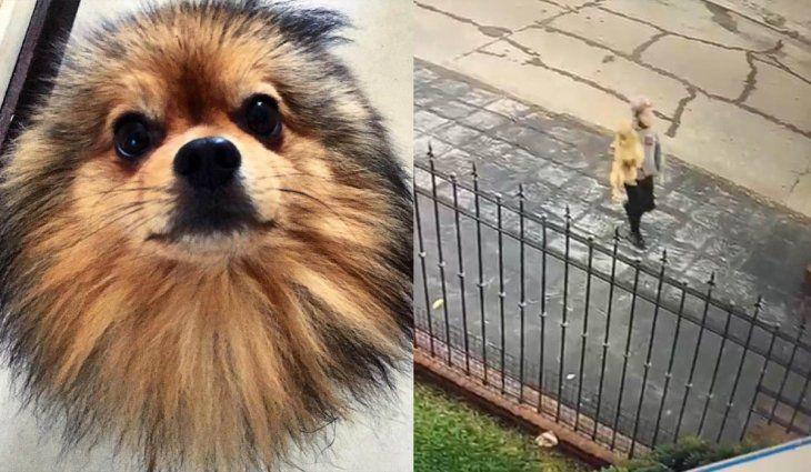 Robó un perro y quedó filmado, pero se niega a decir dónde está