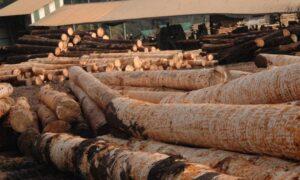 Madereros del país expresan su preocupación ante la fijación del precio mínimo de rollizos aserrables en Misiones