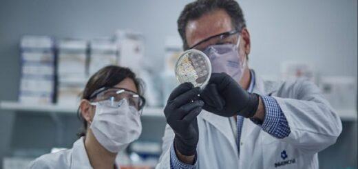 Coronavirus: la revista de The Lancet publicó el estudio realizado por el Conicet sobre suero equino