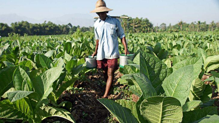 El ministro de Agricultura Luis Basterra admitió que la Nación pretende construir viviendas con dinero del FET y los tabacaleros de todo el país estallaron