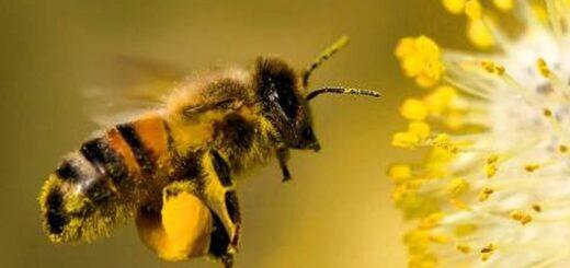 La entomóloga Cecilia Fernández recalcó la importancia de cuidar a las abejas y la biodiversidad dentro de cualquier actividad productiva en Misiones