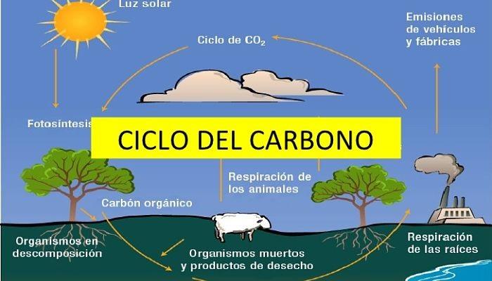 Posadas:彼らは二酸化炭素を酸素に変換する装置である金属の木を作りました