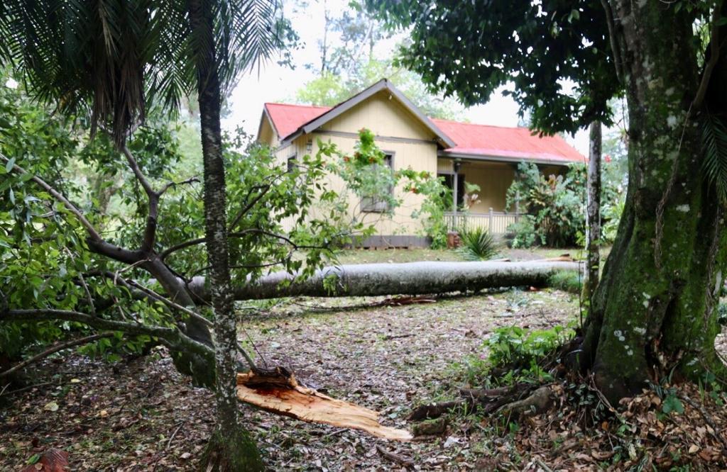 Eldorado: ante el temporal, desde la municipalidad brindaron asistencia inmediata a los vecinos afectados
