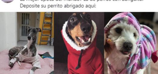 perros con abriguitos