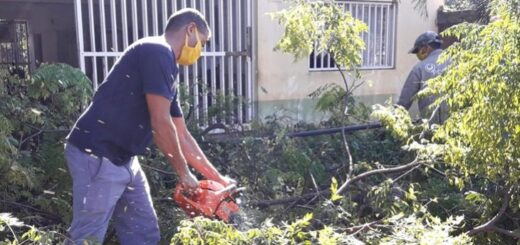 Época de poda: cómo gestionar el servicio que brinda la Municipalidad de Posadas