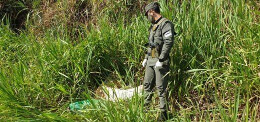 Gendarmería halló más de 50 kilos de marihuana a orillas del río Paraná