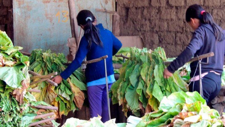 El jefe de Gabinete de Ministros,Santiago Cafiero, presenta un programa con el fin de erradicar el trabajo infantil