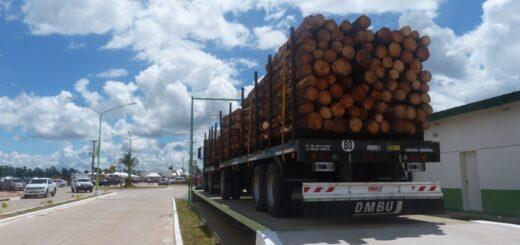 """Mesopotamia: la existencia de plantaciones """"no garantiza una disponibilidad real"""" de rollos de madera para abastecer a los aserraderos PyMEs de la cuenca"""