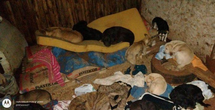 veinte perros y gatos murieron calcinados
