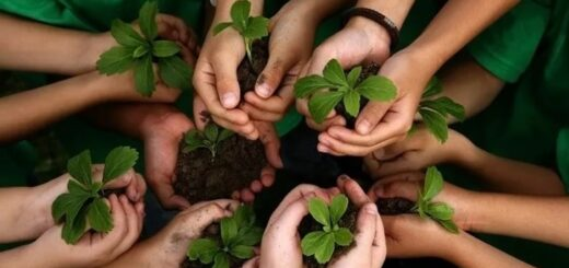 ley de educacion ambiental integral