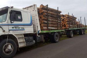 """Regirá desde julio una """"Tasa de Servicios Forestales"""" de un 2% por ingreso de rollos de pinos, araucaria y eucalipto a Misiones"""