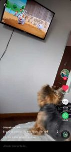 Viral en TikTok: Lola, la perrita que ladra hasta que le ponen su serie favorita