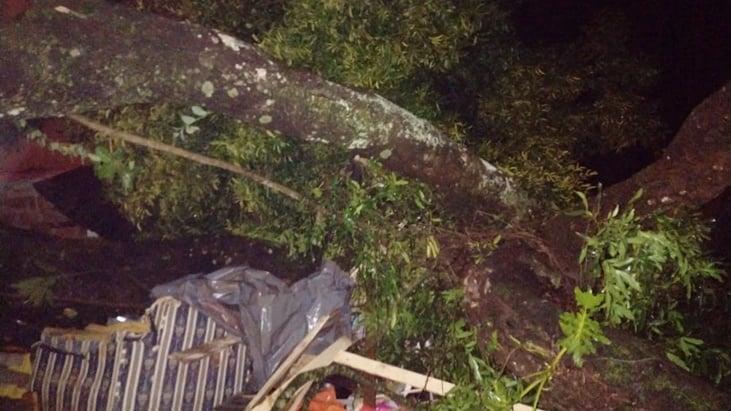 Un árbol cayó sobre dos viviendas en Oberá, hay dos personas heridas