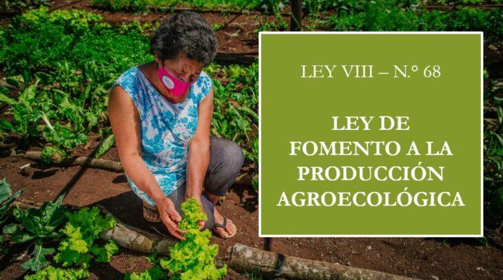 """Misiones continúa trabajando para fortalecer la agroecología: """"Más de 50 chacras están en proceso de transición"""", sostuvo Marta Ferreira"""