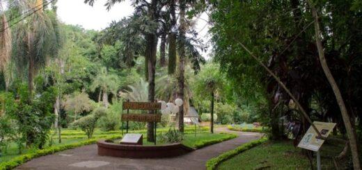 Proyecto Bioparque: se producen más de 10 mil plantines de especies nativas en el Jardín Botánico de Posadas