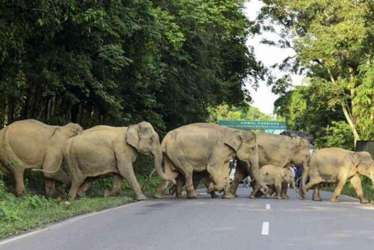 China: misteriosa marcha de elefantes ya recorrió más de 500 kilómetros