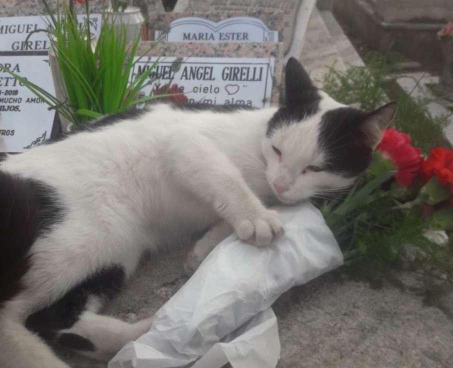 La gatita que cuida la tumba