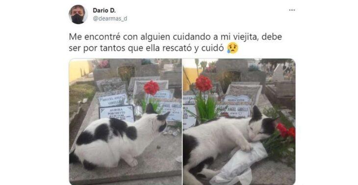 """La increíble historia de la gatita que cuida una tumba y se volvió viral: """"Debe ser por tantos animales que rescató mi mamá"""""""